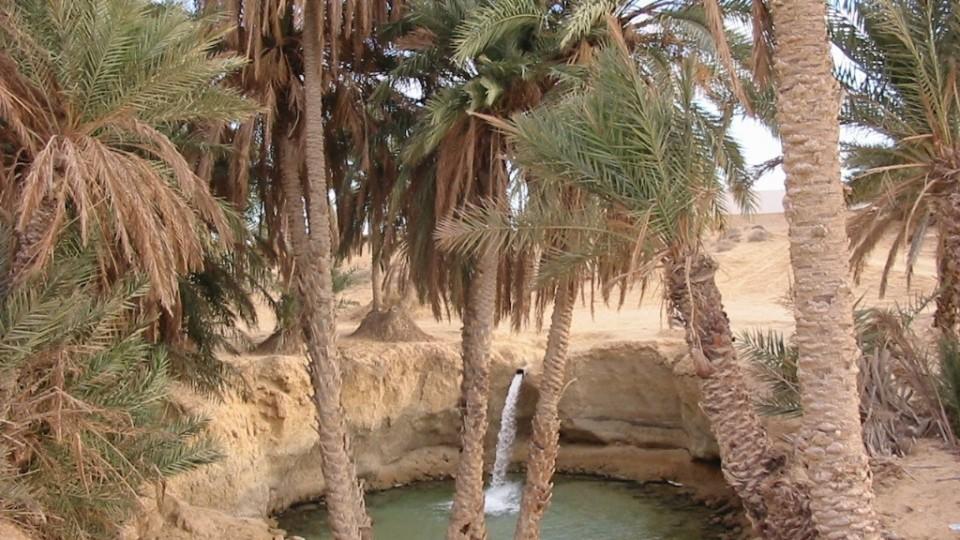 Il deserto con le sue oasi
