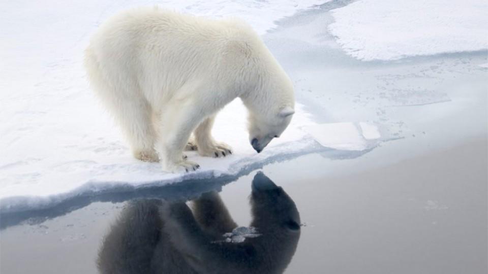 Orso Polare a caccia di foche
