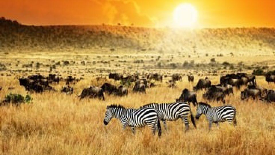 Kenya, paesaggio con zebre