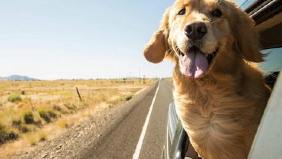 In viaggio con il proprio animale domestico