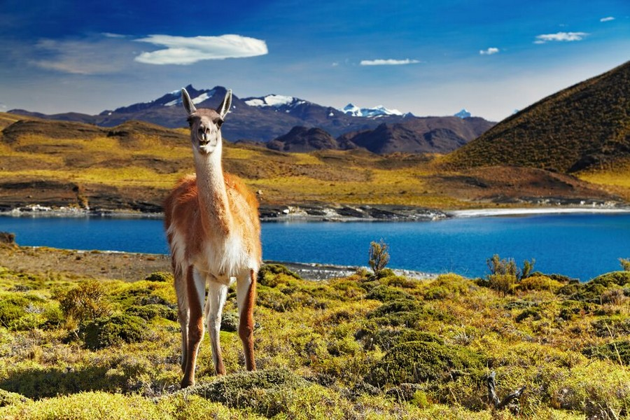Torres del Paine National Park, Patagonia, Cile