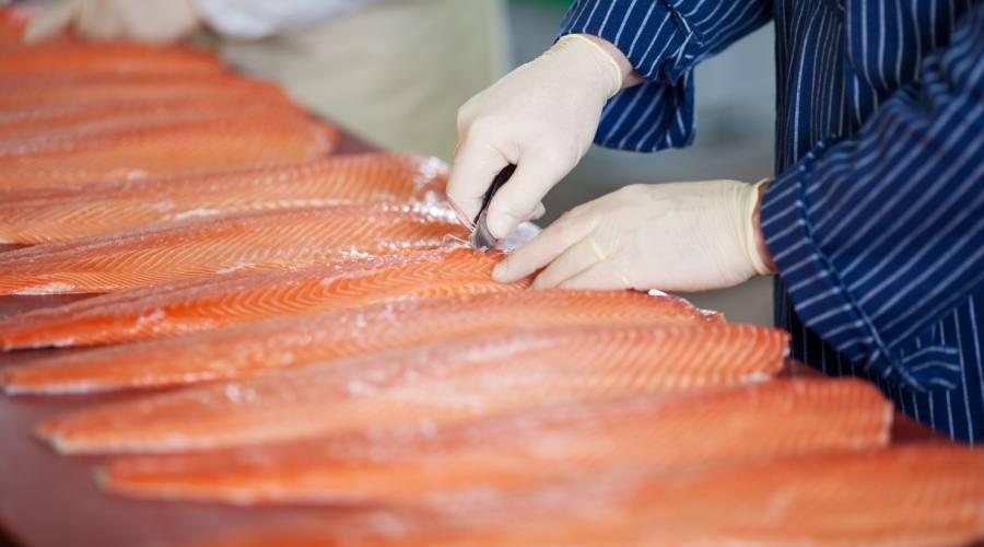 Lavorazione del salmone delle Isole Faroe