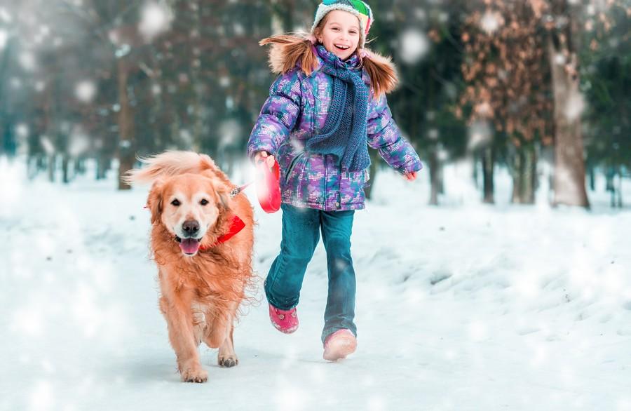 Vacanze sulla neve con il proprio cane