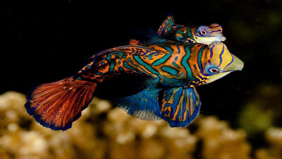 La vita marina a Malapascua