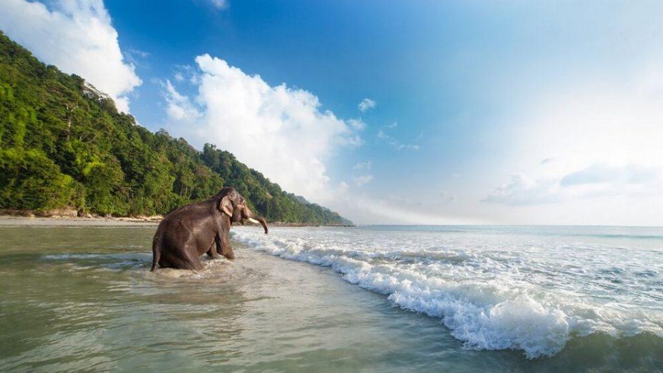 Un elefante fa il bagno su una spiaggia di Havelock