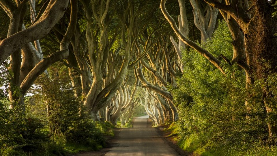 The Dark Hedges, Strada del Re