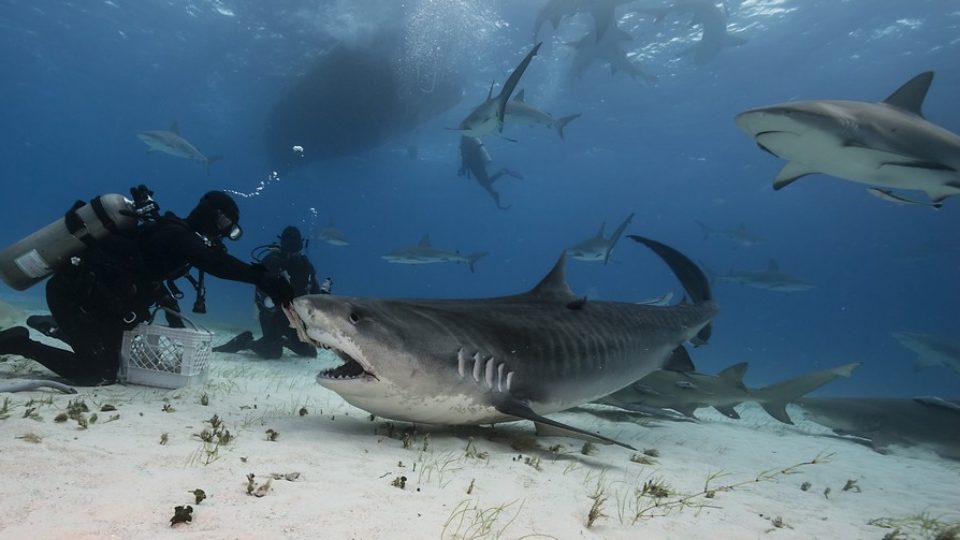 Nuotare con gli squali alle Bahamas