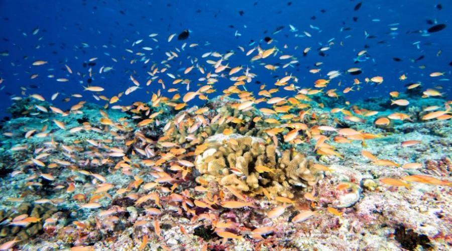 Mondo sottomarino alle Maldive