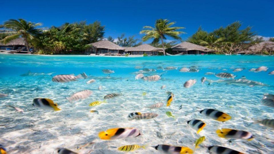 Maldive, vita marina