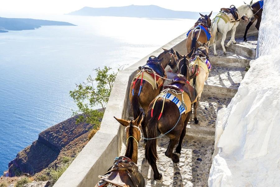Gli asinelli di Santorini