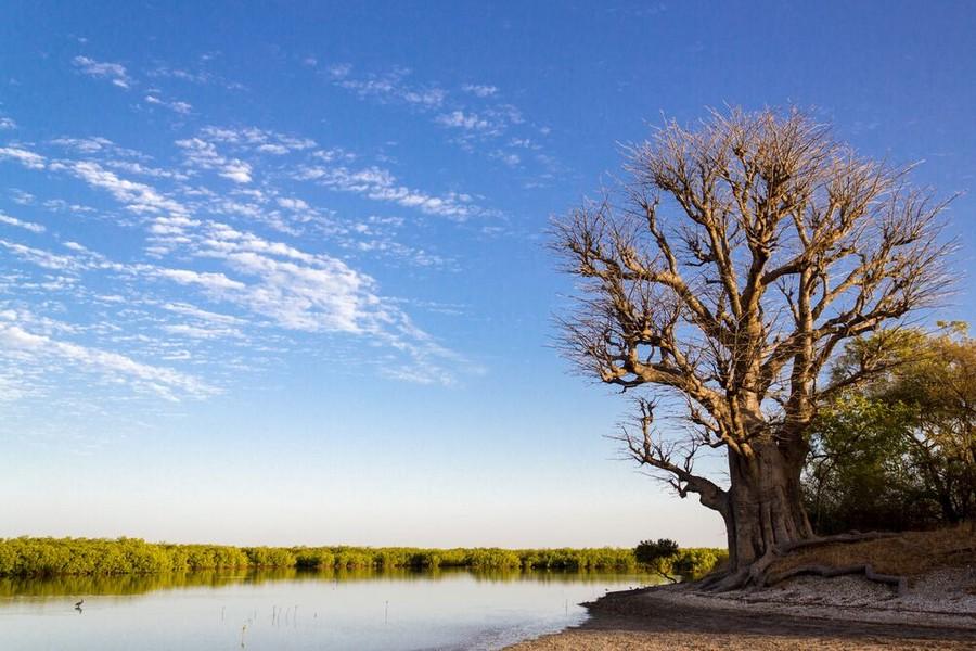 La sorprendente natura del Senegal