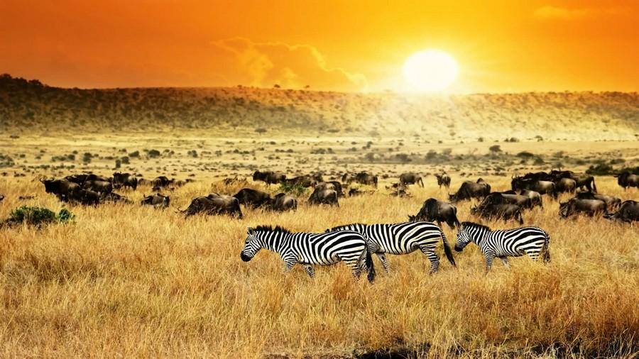 Kenya, zebre e animali in libertà