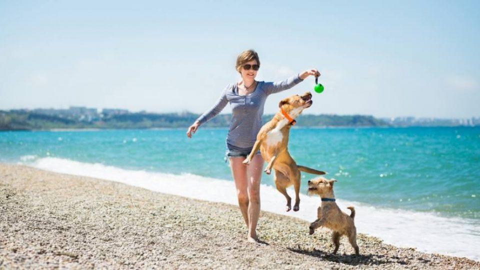 In vacanza al mare con i proprio cani