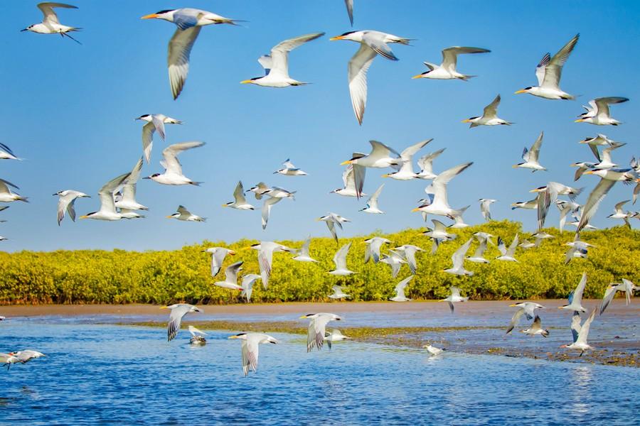 Senegal, una riserva naturalistica della Petite Côte