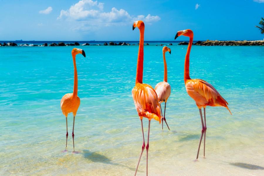 Fenicotteri ad Aruba
