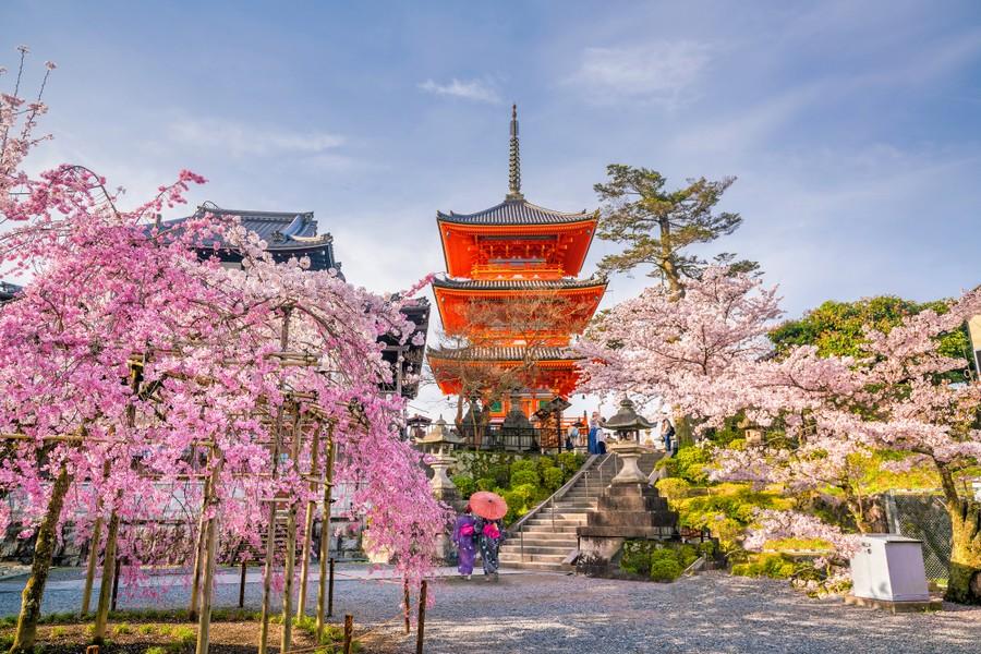 Fioritura dei ciliegi a Kyoto, Giappone