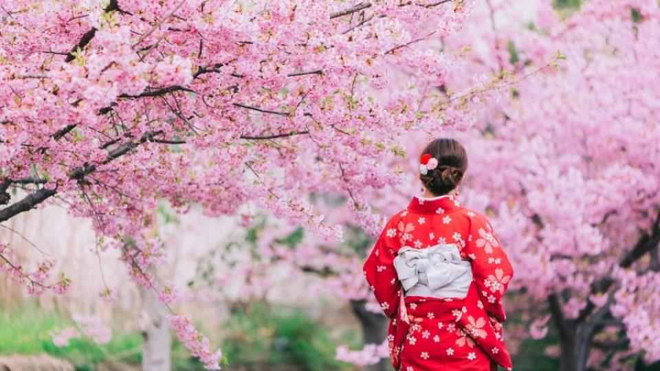 Al via la fioritura dei ciliegi in Giappone