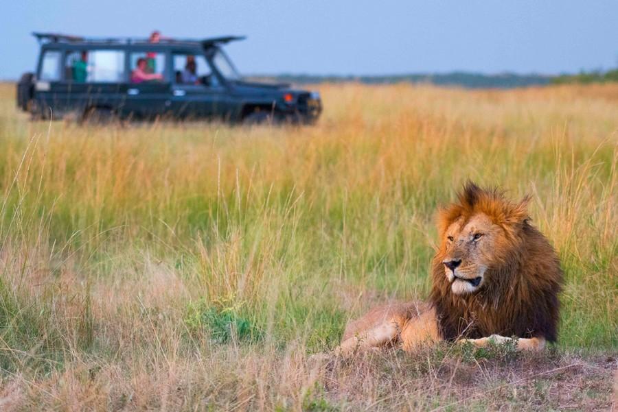 leone-safari-sudafrica